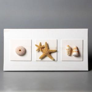 Quadro con stelle marine, ricci e conchiglie