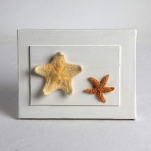 Quadretto con stelle marine