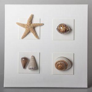 Quadro stella marina conchiglie