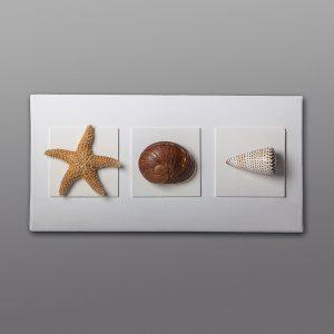 Quadro con stella marina e conchiglie